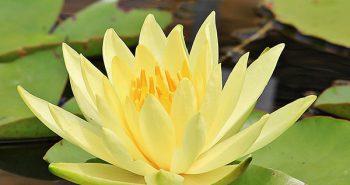 intervista francesca bonsignori qi gong benessere meditazione